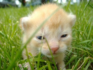 cute baby kitten just opening it's eyes